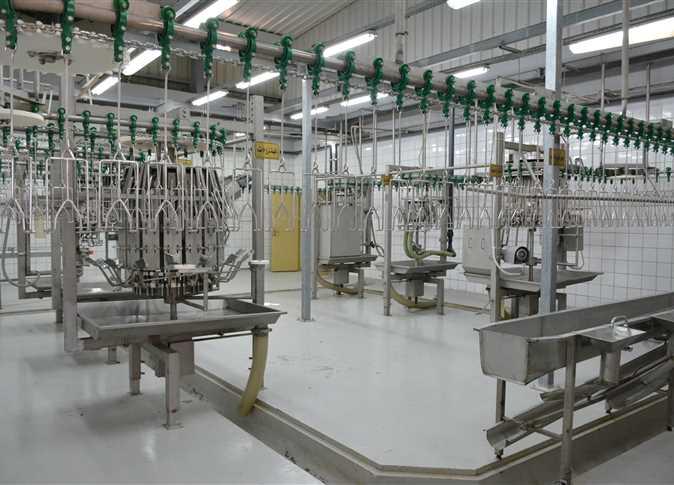 1000BPH  Stainless Steel halal chicken slaughterhouse equipment for sale
