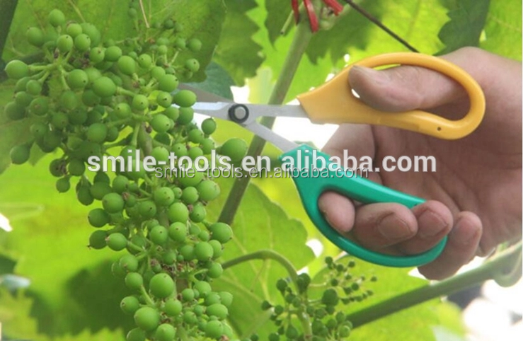 Hot Selling Cheap Stainless Steel Garden Scissors Flowers Fruit Grape Pruning Shears
