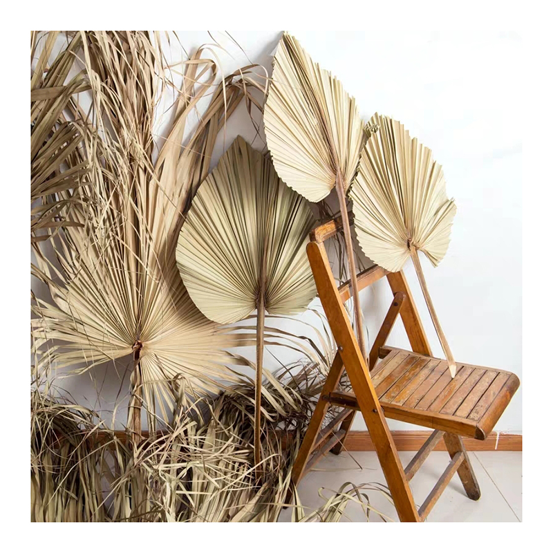 Wholesale most popular real natural dried palm leaves for home decoration