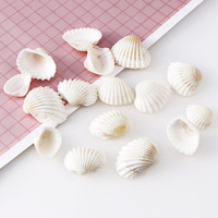Bulk Natural Shells DIY Crafts Seashells With Holes