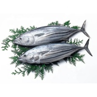 Indonesia Skipjack Tuna Frozen Whole Fresh (Size 1kg up) Export Quality High-Quality