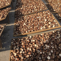 Dried shiitake mushroom/ High quality for Vegetarian foods (whatsapp +84 845 639 639)