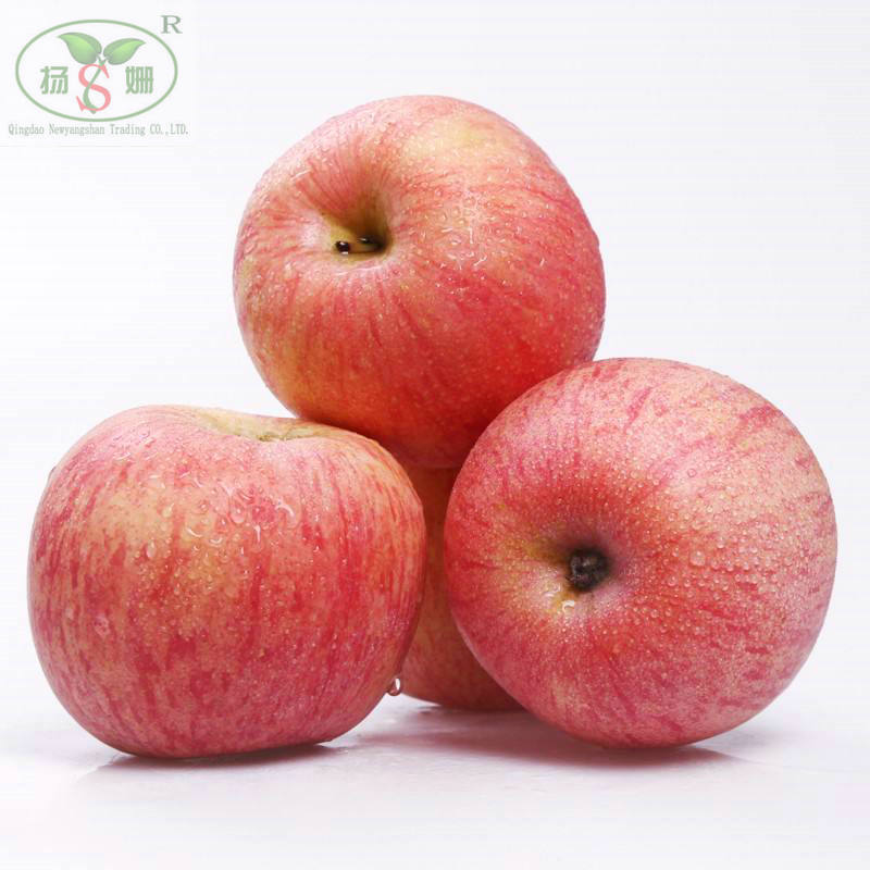 Premium quality low price 2019 new fuji <strong>apple</strong>