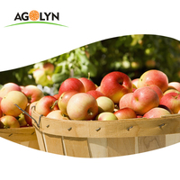 AGOLYN Fresh Fruit Sweet Juicy Royal Gala Apple