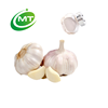 /product-detail/free-sample-allicin-garlic-extract-62289758806.html