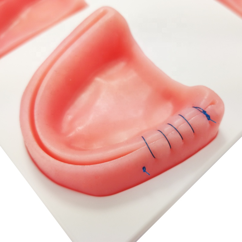 Dentistry School Teeth Suture Practice Models Dental Suture Training Pad