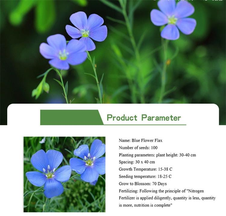 Touchhealthy Factory Supply Garden Scenery Blue Flower Flax Flower Seed for Planting