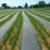 non woven fabric for weed control barrier