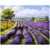 Cheap promotional gift wall decor art handpainted lavender digital oil painting