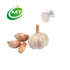 /product-detail/ep-standard-allicin-garlic-powder-62282011221.html
