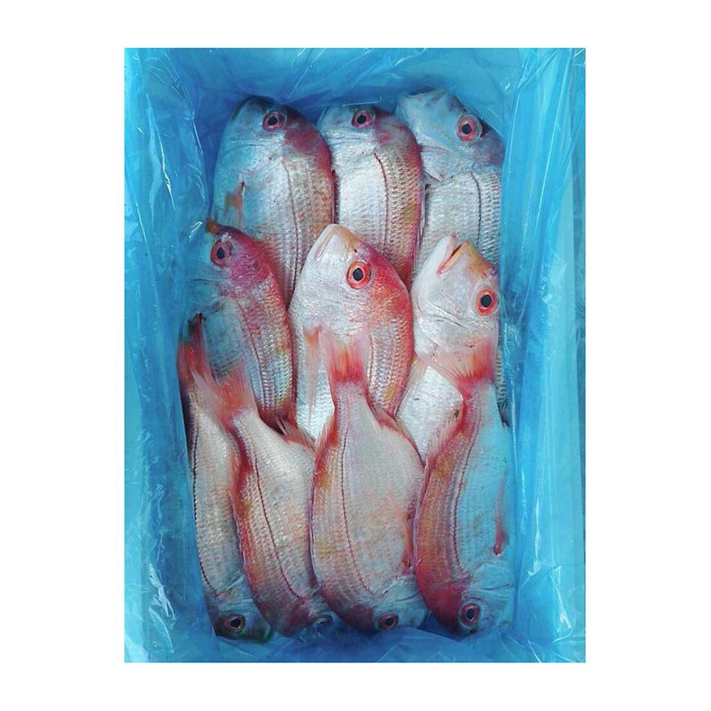 hot selling good price Yellowback seabream live fresh fish seafood