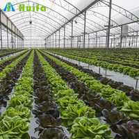 Low Cost Productive Plastic Greenhouse Agriculture