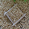 High Quality Natural and Non- GMO Yellow Soybean Seeds / Soya Bean /Soy Beans