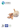 /product-detail/professional-manufacturer-supply-high-quality-pure-natural-garlic-oil-60640335850.html