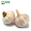 /product-detail/manufacturer-supply-pure-natural-garlic-bulb-extract-allicin-powder-1-2--62083541312.html