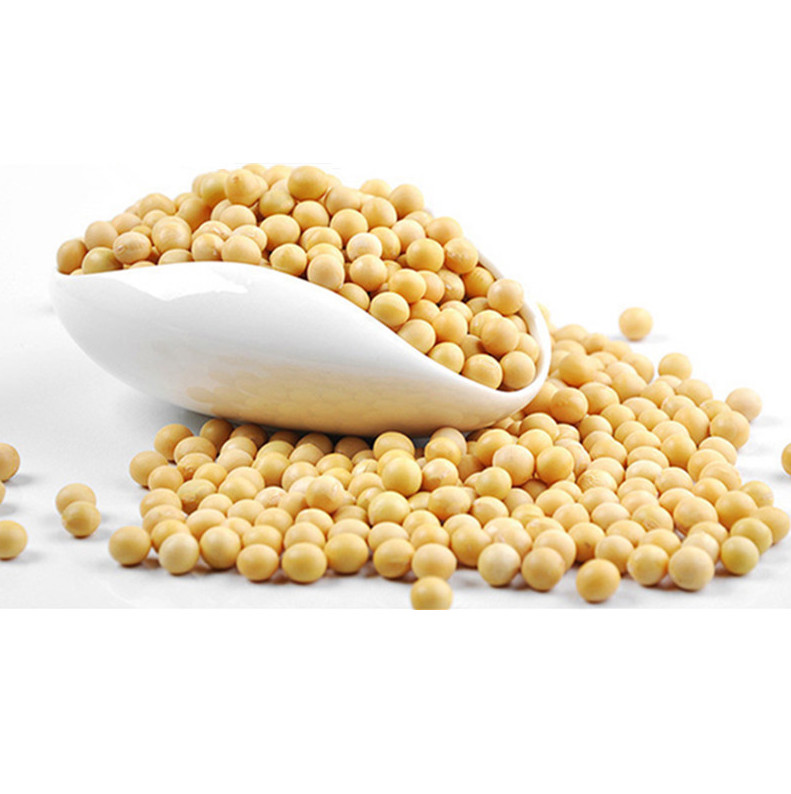 SOYBEANS DIRECT SUPPLIER / GMO & NON GMO SOYABEAN SEEDS