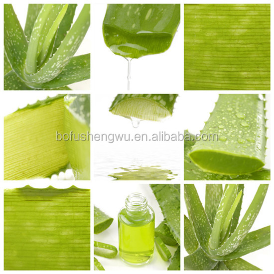 Factory direct supply with competitive price 100% Natural 20% Aloin Aloe Barbadensis Miller