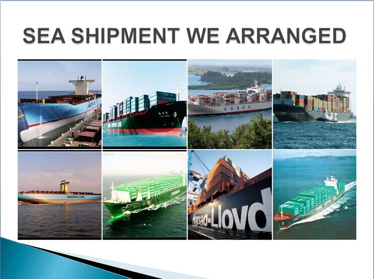 Cheap Sea Freight Rate from China (Shenzhen to Algeria) by CMA
