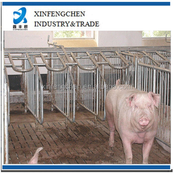 Hot-dipped galvanized steel pipe pig cages