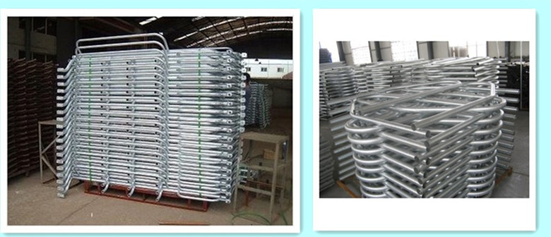 Poultry equipment,galvanized gestation stall