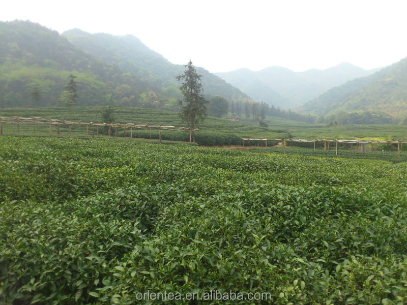 lung ching tea , new hit products with permanent quality