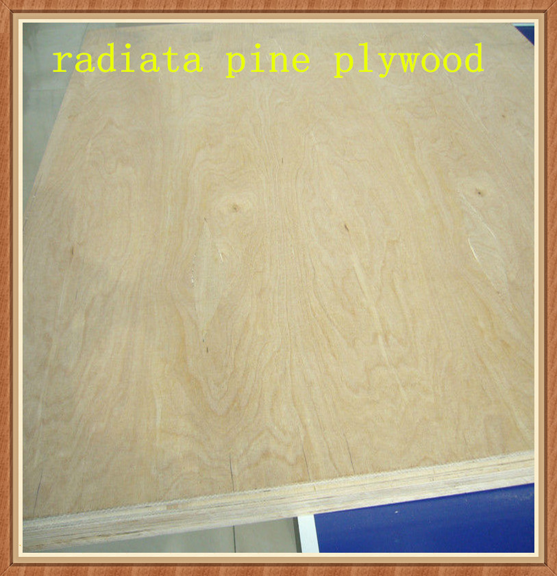 White mm russian pine plywood buy