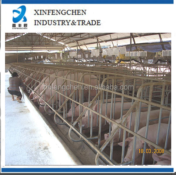Pig farming equipment swine gestation stall
