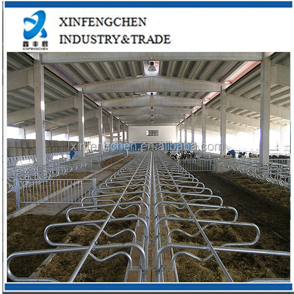 stainless steel dairy cow stall for sale