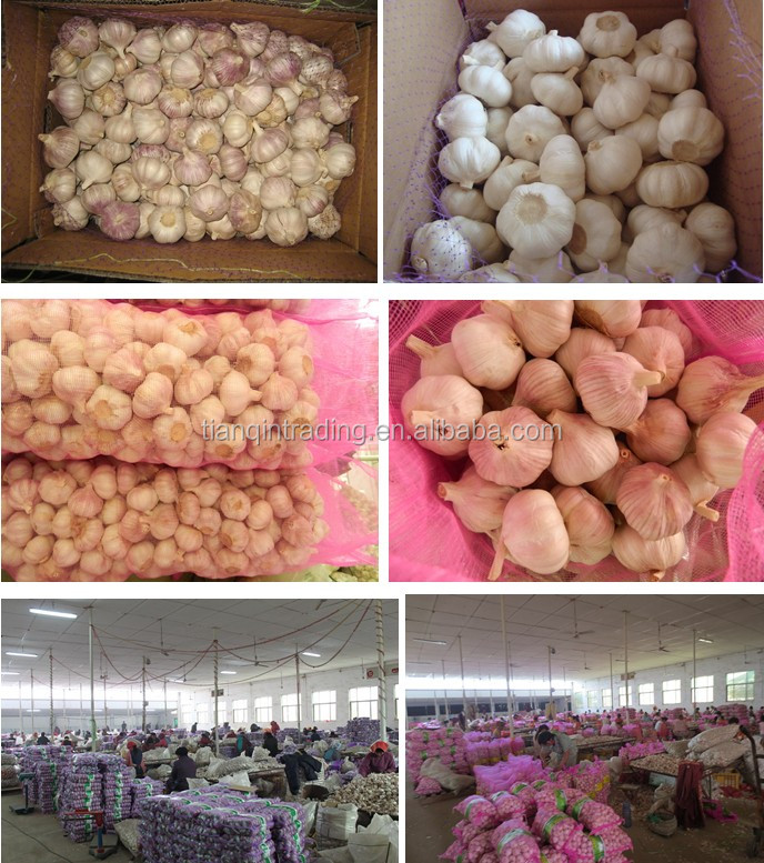 Chinese supplier of Jinxiang fresh garlic