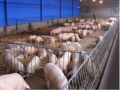 pig equipment sow crates