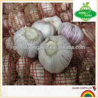 New Red Garlic Competitive Price