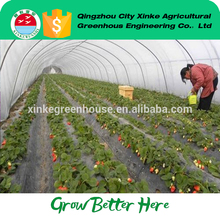 CE Certified plastic sheet tomato greenhouse farming With Professional Technical Support