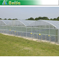 Low Cost Multi Span Greenhouse with Roofing Material