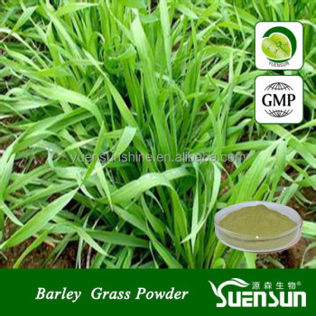GMP factory supply barely grass juice green powder