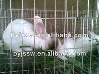 Easy Clean Rabbit Wire Cages