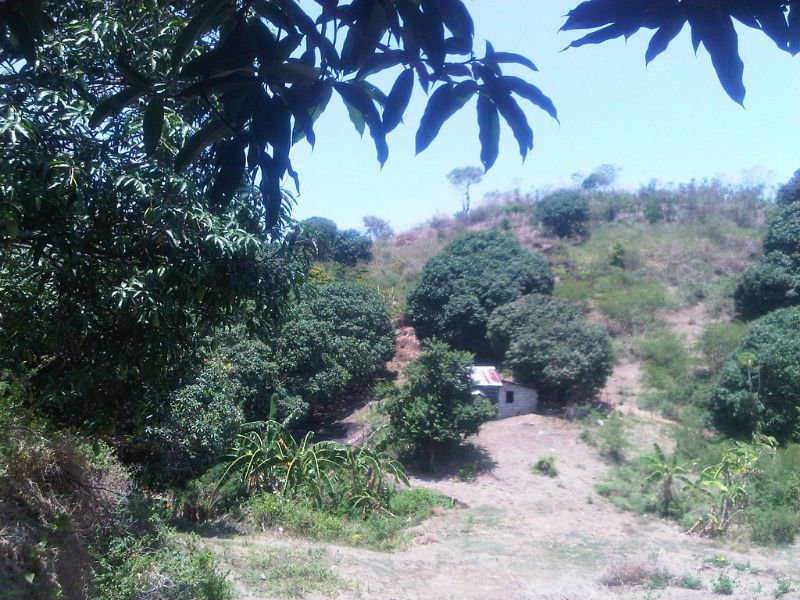 Lot, Agricultural land, mango plantation