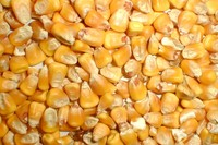 Corn for animal feed, ship parties