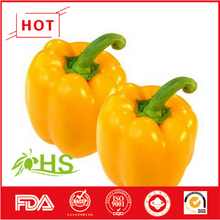 Bulk colored bell pepper for sale