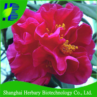 High germination camelia flower seed for planitng