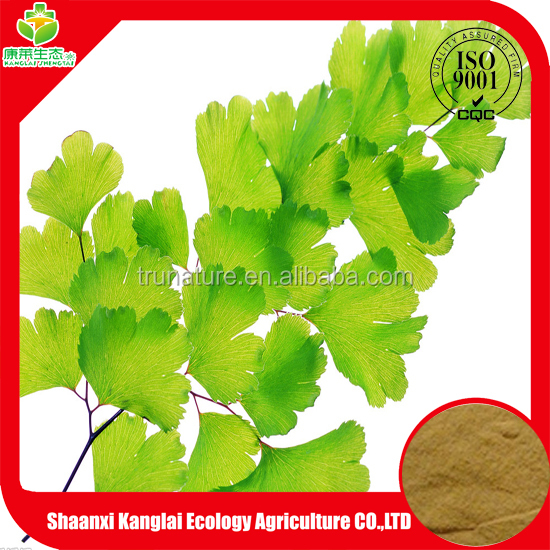 High Quality Ginkgo Biloba/Benefits of Ginkgo Biloba Extract Powder with Low Price and Good Quality
