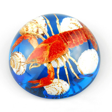 Wholesale Real Crayfish Specimen Encased in 95 mm Crystal Dome for Paperweight