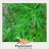 Chinese plant Reduce blood pressure function Sweet Wormwood Extract/Artemisia Annual Extract