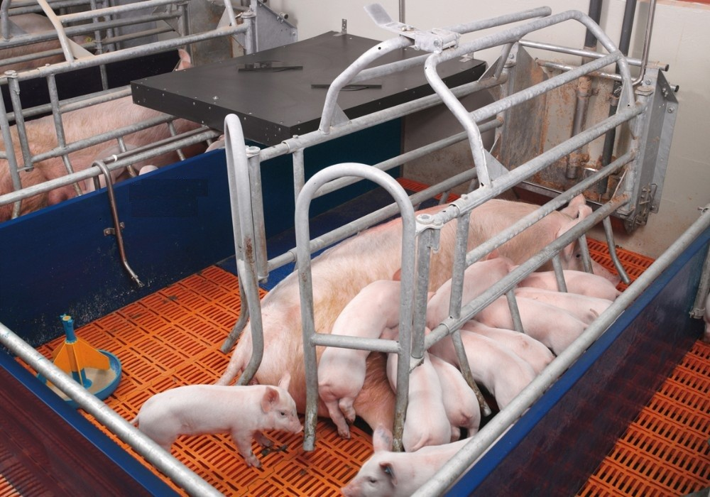 Farrowing stall for pigs pig crate
