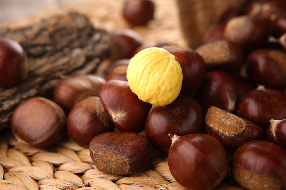 Organic kuancheng Fresh chestnut--New Crop Chestnut