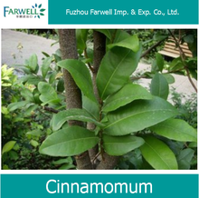 Farwell Wholesale Cinnamomum CAS 8015-91-6 Plant Extract