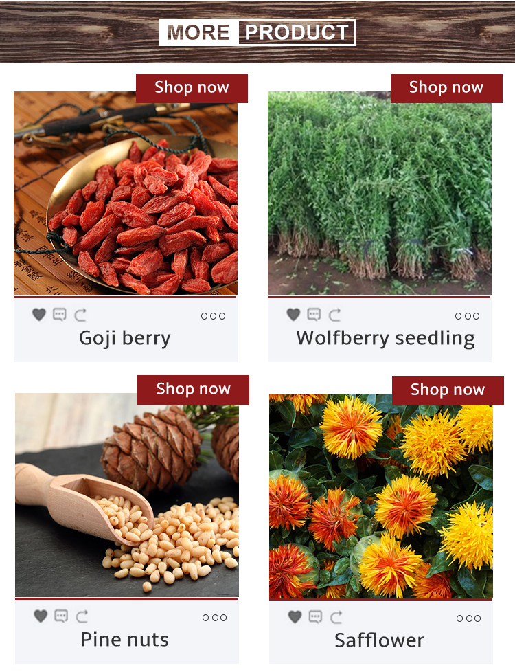 2019 Chinese Original Pine Nuts Pine Kernels for Wholesale