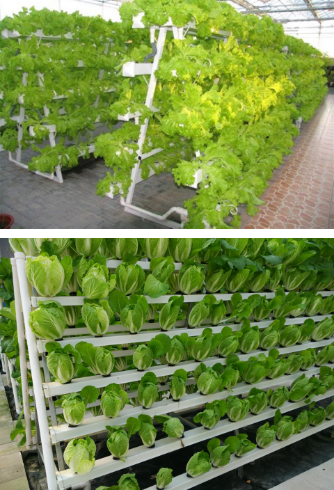 Wholesale greenhouse farm use hydroponics grow kit pipe for lettuce and spinach