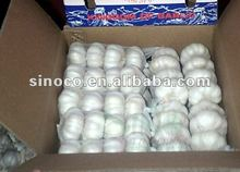 2012 China garlic price in 10kg carton package.MOQ:1X40FCL.