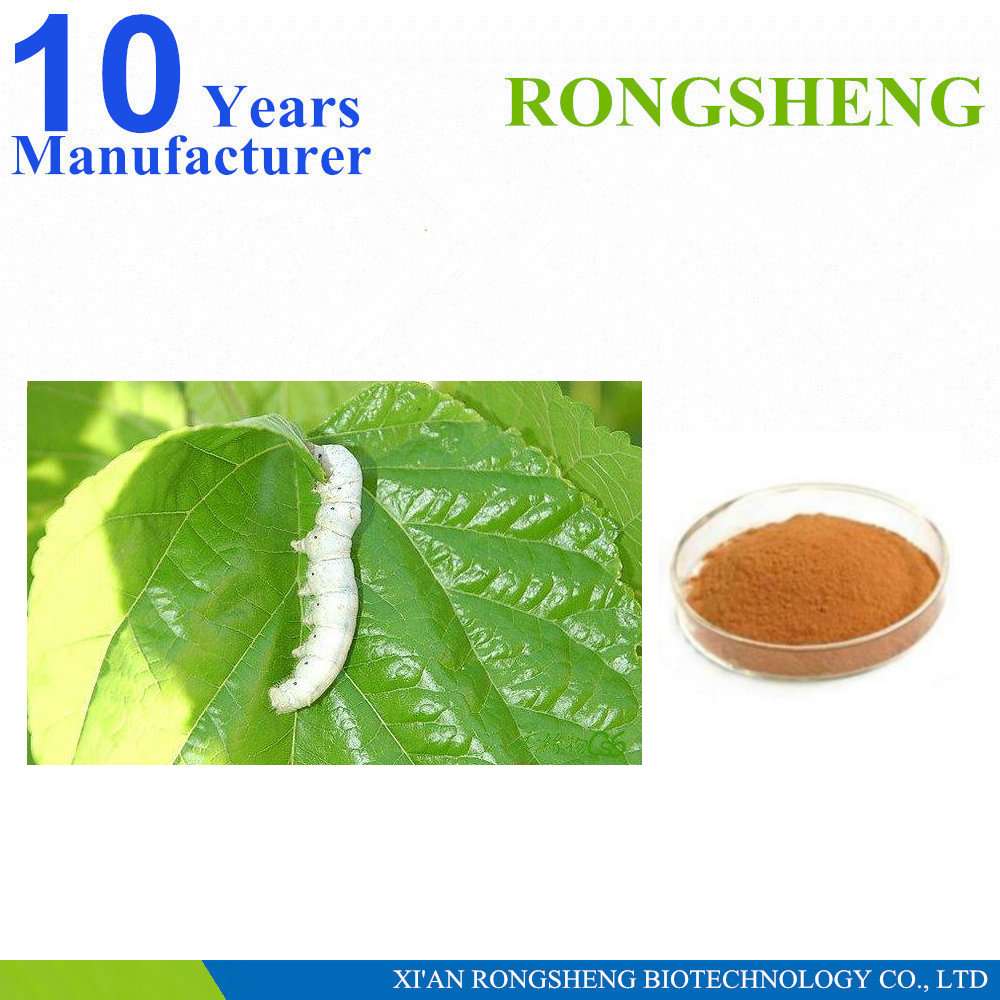 Top Quality Natural Bombyx Mori Herbal Extract powder