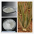 200-1aloe vera gel spray dried powder